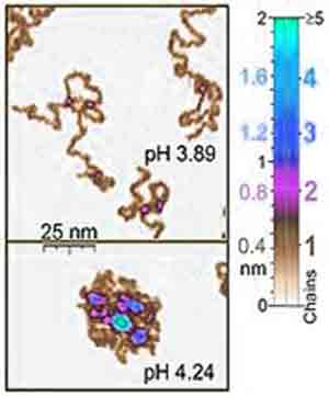 Atomic Force Microscope image molecule