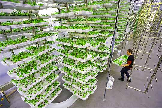 Vertical Stacking of Starter Plants
